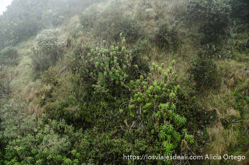 dos días en quito laderas volcán con niebla