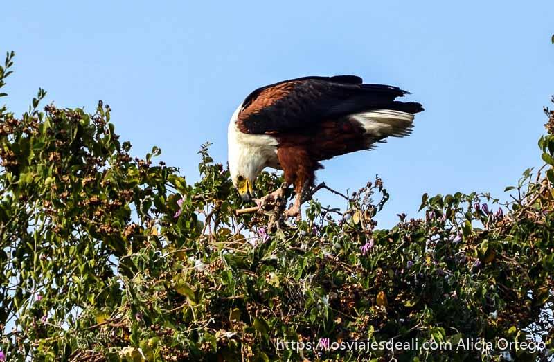 ecosistema del delta del okavango