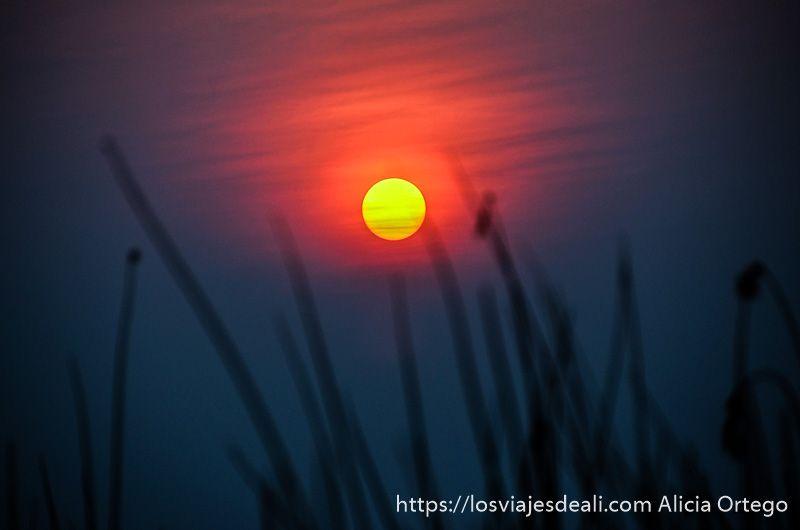ecosistema del delta del okavango atardecer