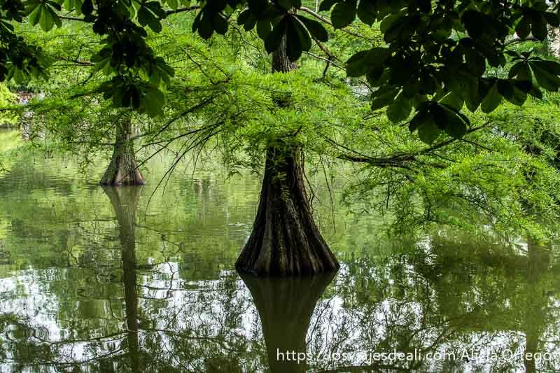 guia del retiro árboles en el agua