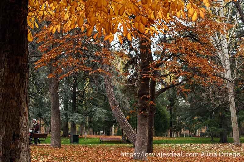 guía del retiro árboles en otoño