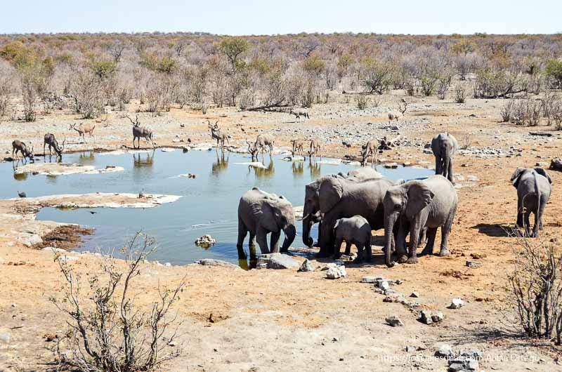 waterhole de Moringa en Etosha