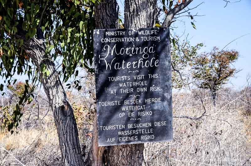 waterhole Moringa de Etosha