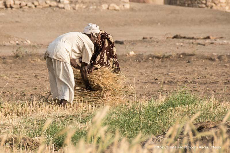 campesinos nubios junto al templo de soleb recogiendo gavillas de cereal
