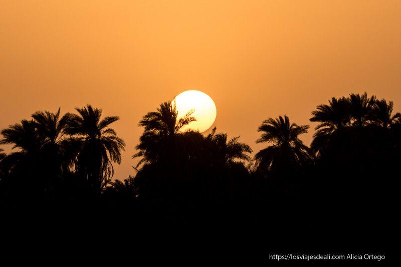 el sol se esconde tras las palmeras en el Nilo