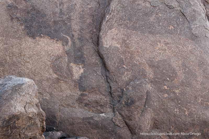 grabado rupestre de una leona frente a un toro