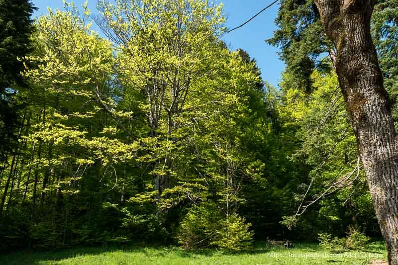bosques alrededor del castillo de peles en sinaia
