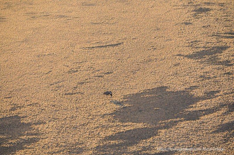 órix visto desde lo alto de la duna 45
