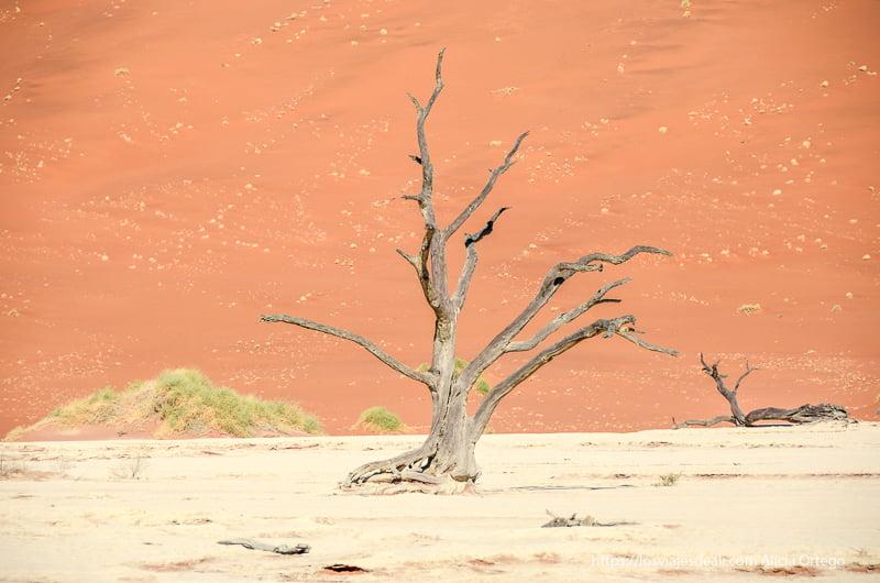 árbol seco contra arena naranja en Deadvlei namibia