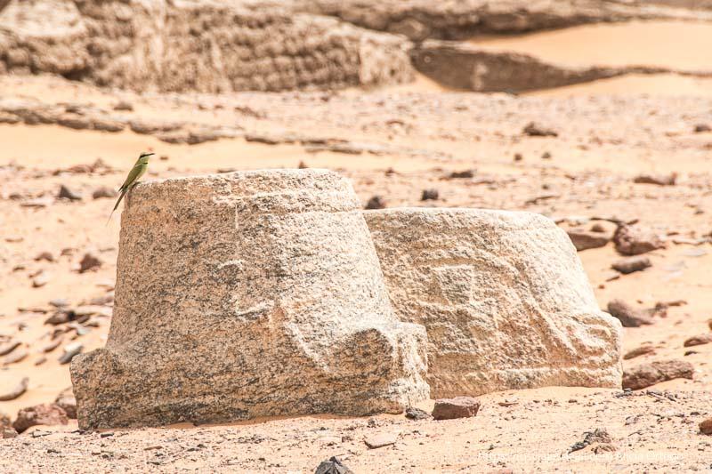 capiteles de columnas cristianas con un pájaro de color verde en Old Dongola Sudán