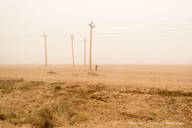 postes de la luz y burrito bajo la gran tormenta de arena en Sudán