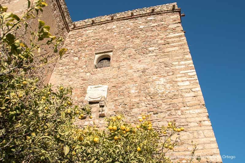 torre de la alcazaba de Málaga con limonero