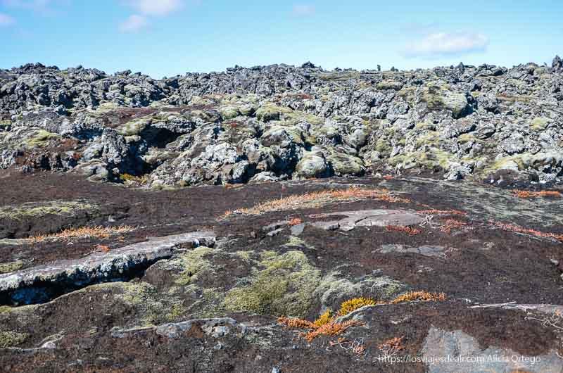 piedras volcánicas con musgos verdes y rojos junto a blue lagoon