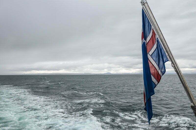 bandera de islandia con el mar de fondo en excursión buscando ballenas en islandia