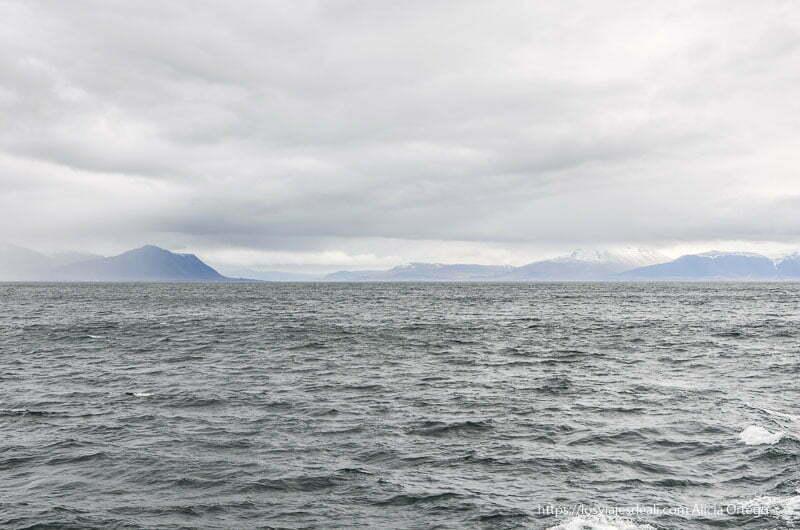 mar y montañas al fondo bajo el cielo nublado en la excursión buscando ballenas en islandia