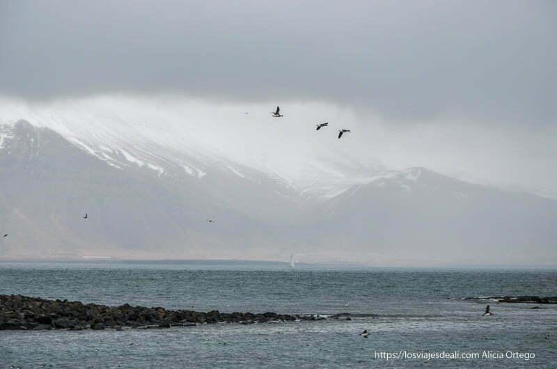 tres frailecillos volando recortados en fondo de montañas nevadas en la excursión buscando ballenas en islandia