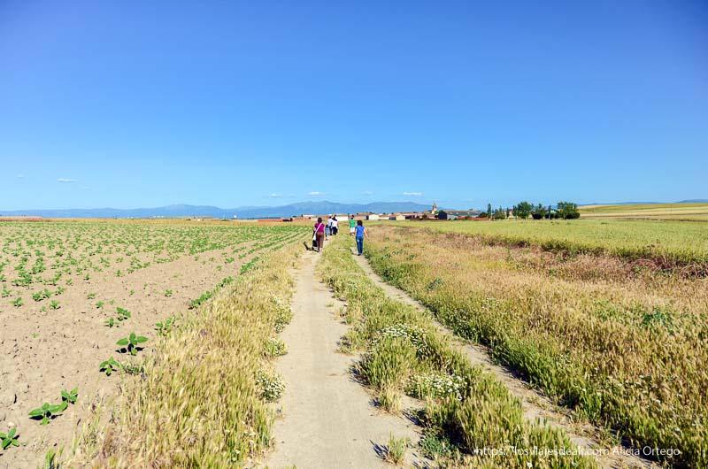 camino entre campos de castilla
