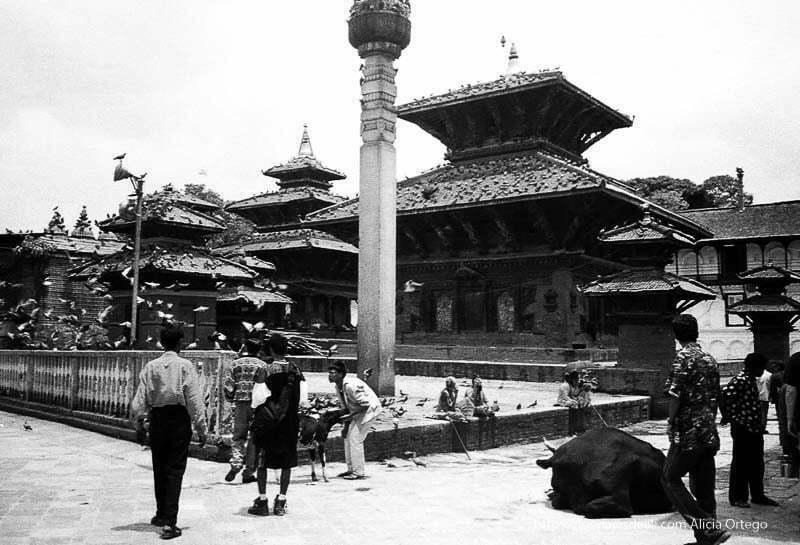durbar square de katmandu con vaca tumbada palomas volando sadhus sentados nepal