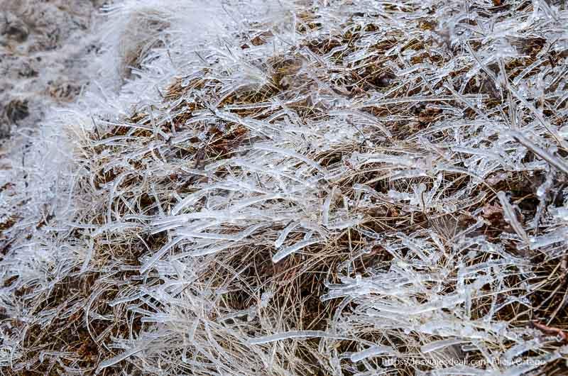 hierba congelada en filamentos de hielo triángulo dorado de islandia