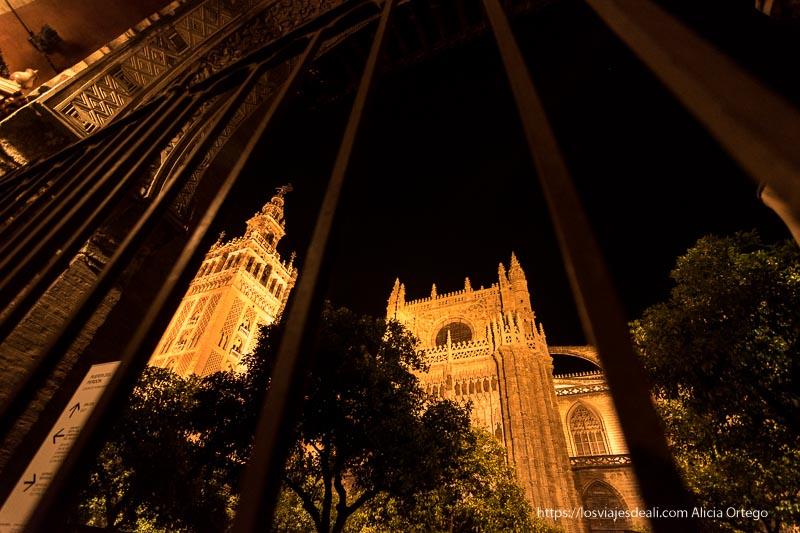 vista a través de barrotes de puerta del perdón con giralda y catedral iluminadas