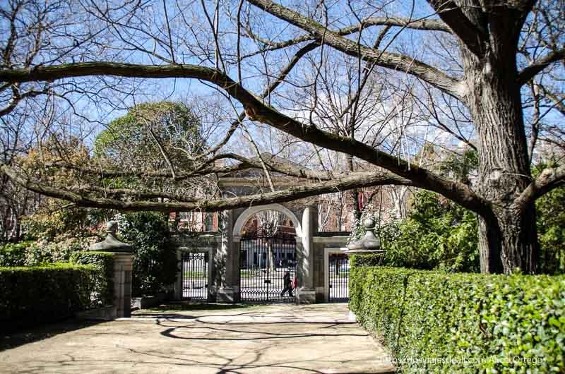 árbol enorme que extiende sus ramas sobre camino de tierra y al fondo puerta de piedra del real Jardín Botánico de Madrid