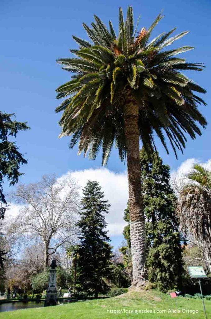 palmera altísima junto a laguito en el real Jardín Botánico de Madrid