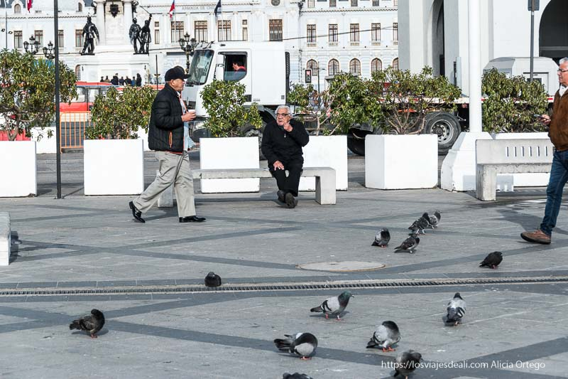 señor sentado en banco con palomas Viña del mar y valparaíso