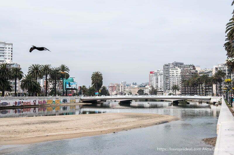 panorámica de viña con palmeras, edificios altos y un puente Viña del mar y valparaíso