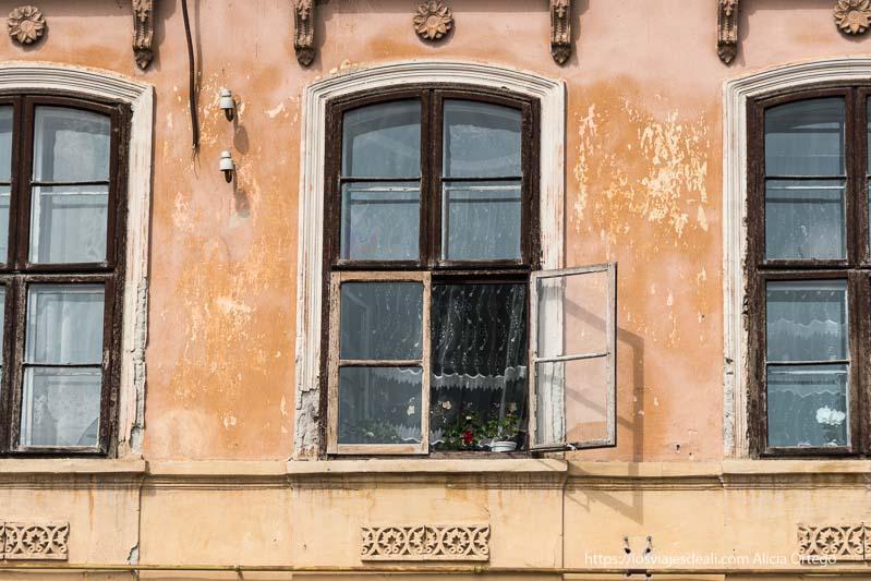 ventanas antiguas con macetas y visillos excursión a bran y rasnov