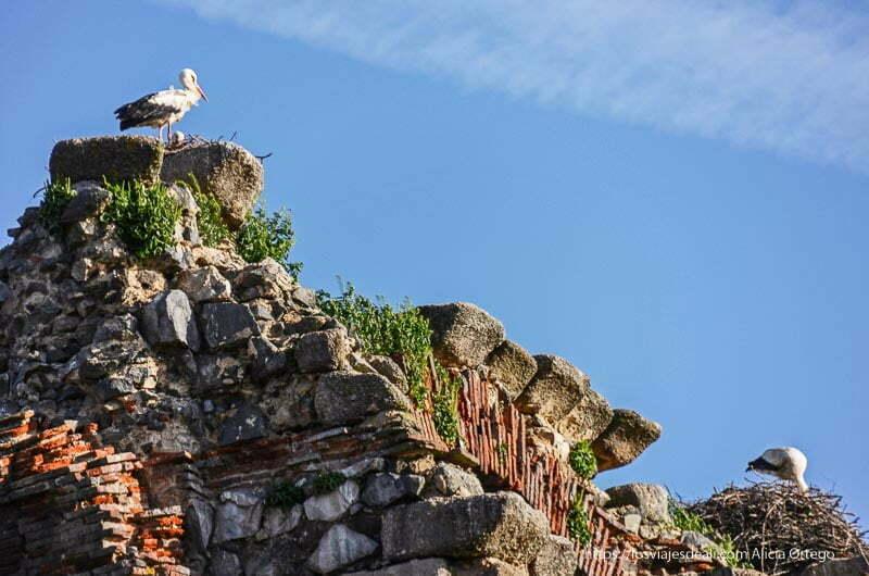 dos cigüeñas en sus nidos en la parte superior del acueducto de mérida
