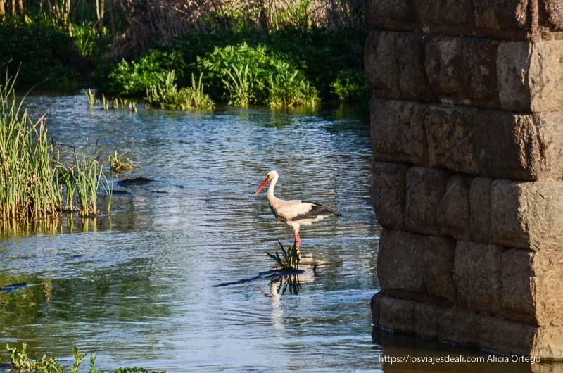 cigüeña al lado de uno de los pilares del acueducto de mérida