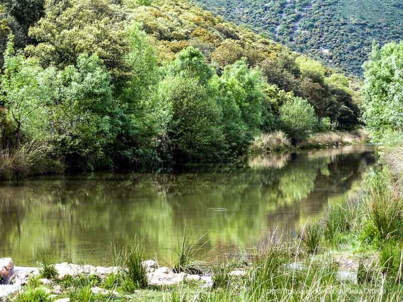 río con árboles reflejándose en sus aguas