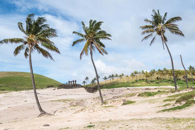 tres palmeras en primer plano en arena blanca y al fondo fila de moais cómo es viajar a Isla de Pascua