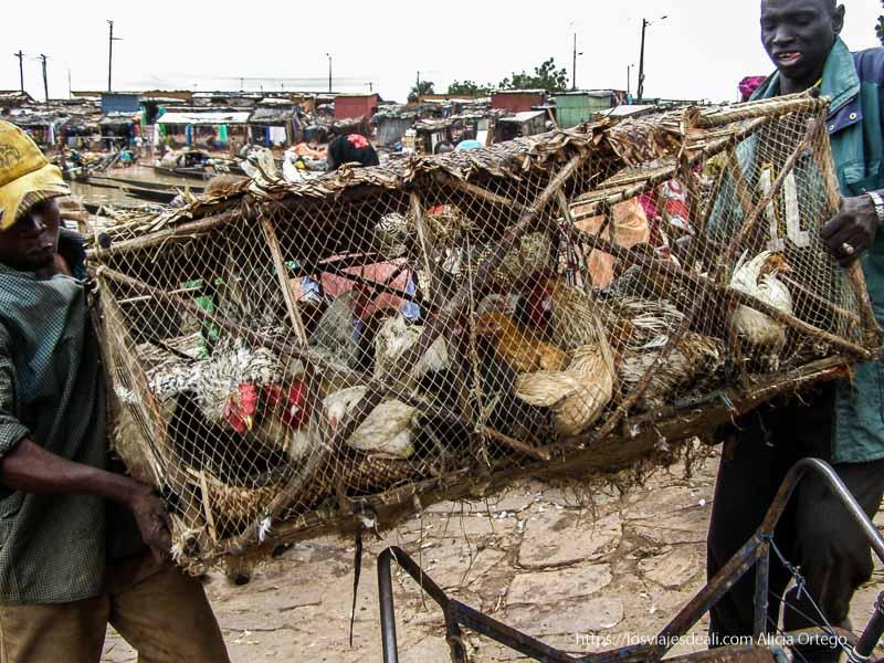 dos hombres llevan jaula de gallinas en mopti