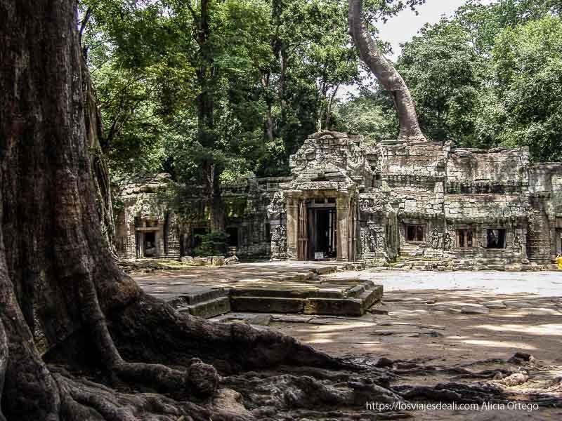 templos de Angkor en la selva