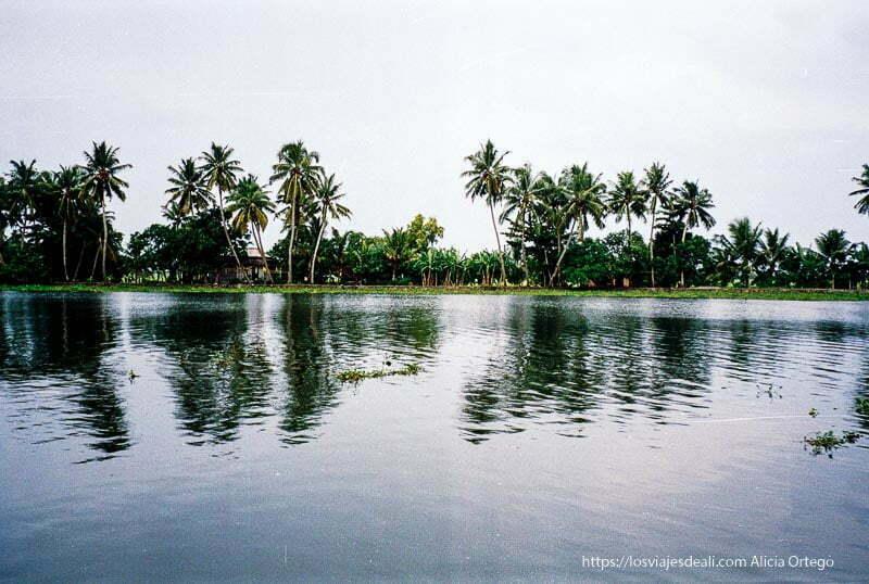 palmeras reflejándose en el agua de los backwaters de kerala