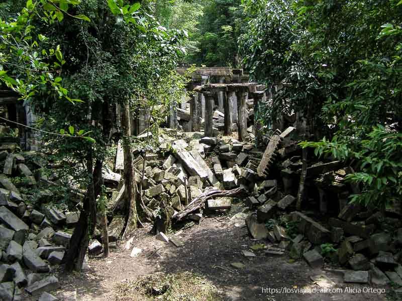 selva y ruinas en beng mealea