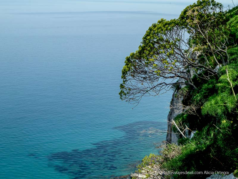 árbol recortándose sobre mar azul turquesa en cefalú