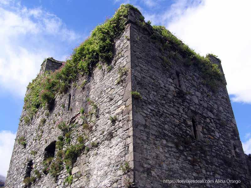 torre de carlingford costa este de irlanda