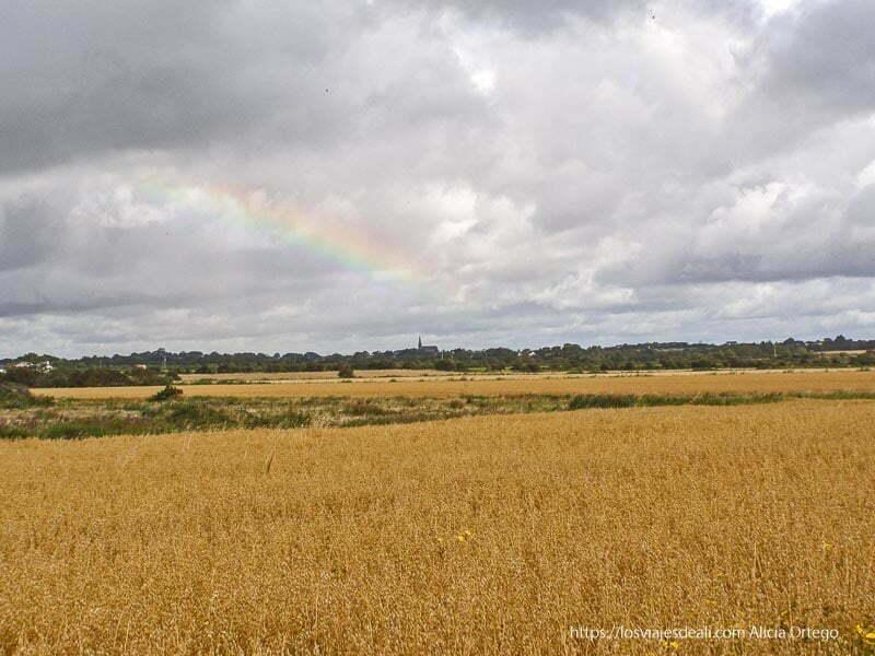 campo de cereal con iglesia al fondo y arco iris costa este de irlanda
