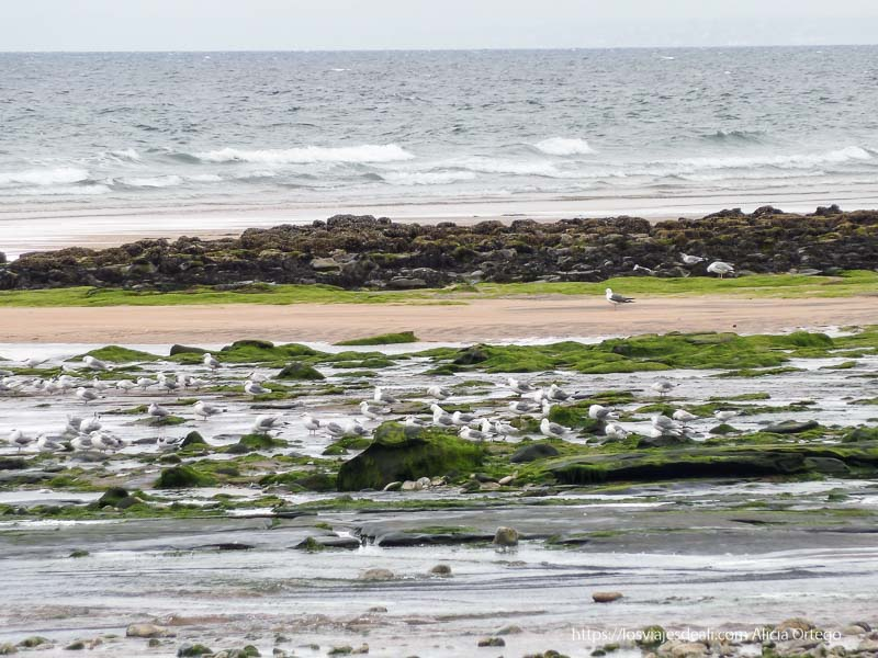 playa con gaviotas el burren