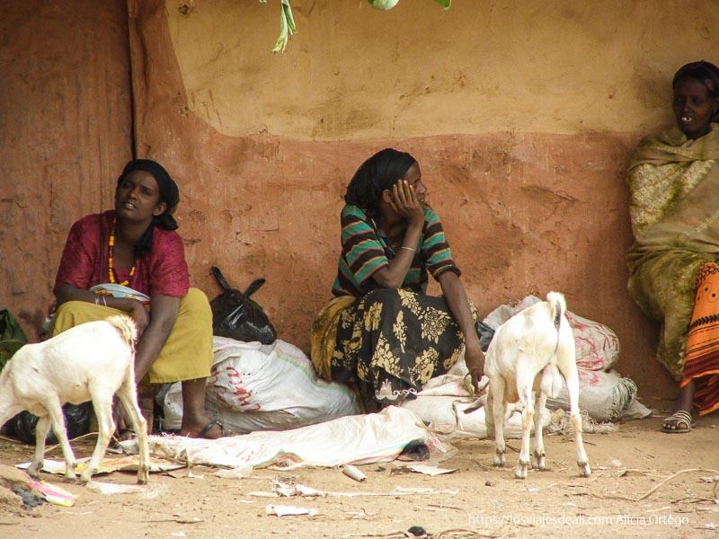 mujeres sentadas con cabras el sod