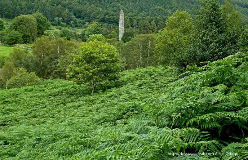 paisaje de helechos verdes y árboles con torre de glendalough al fondo