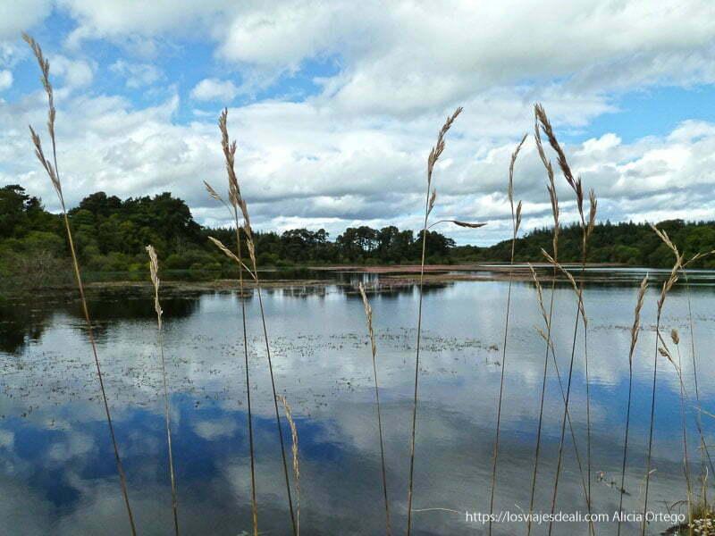 lago cerca de roundwood con nubes reflejándose en agua glendalough