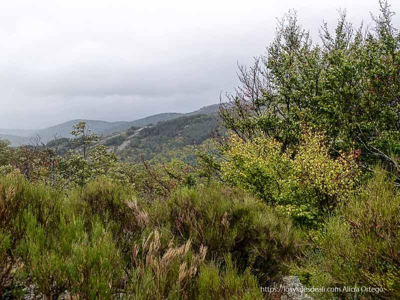 paisaje de monte en el hayedo de tejera negra