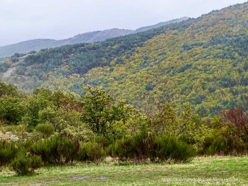 paisaje desde arriba con monte lleno de hayas hayedo de tejera negra