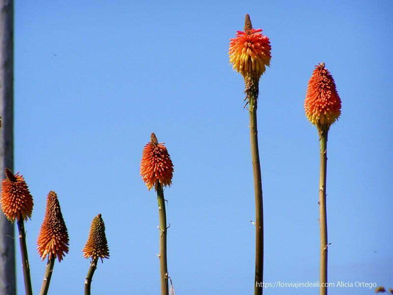 flores de color rojo Inishbofin