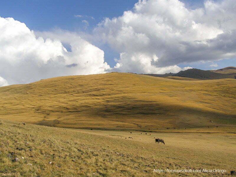 paisaje junto al lago song kol con lomas de hierba amarillenta