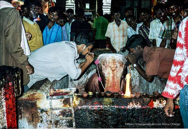 hombres diciendo cosas a un toro en el templo de madurai tamil nadu