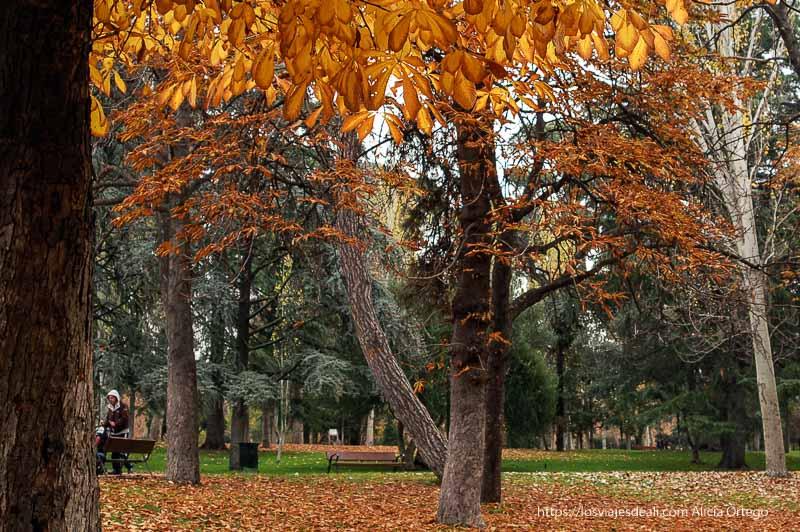 árboles con hojas rojas junto al palacio de cristal de el retiro